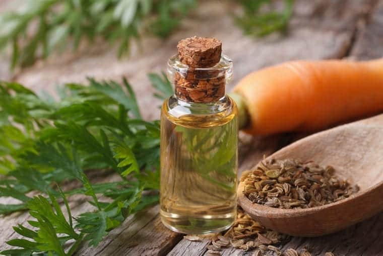Chiki Buttah Products Carrot Seed Oil